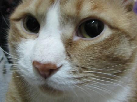 Kitty Jack
