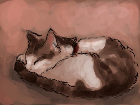 Tobycat takes a snooze
