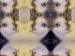 kaleido-kitty